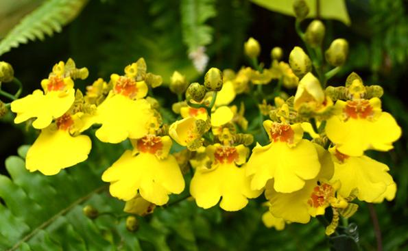 Gärten der Welt Orchidee