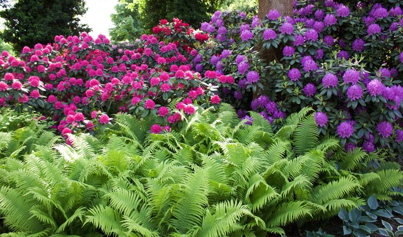 Frühling in den Gärten der Welt